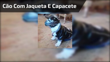 Cachorrinho Com Jaqueta E Capacete De Moto, Veja Que Fofura!