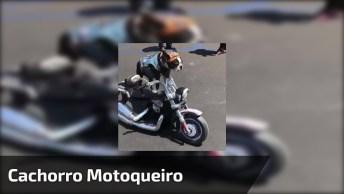 Cachorro Motoqueiro Que Tem Sua Própria Moto, Olha Só A Pose!