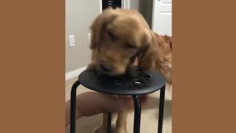 Brincando Com O Cachorro De Morder O Dedo - Se Ele Pega. . .