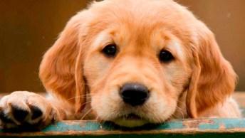 Cachorra Adora Tapinhas De Carinho Na Barriga - Não Para Não!