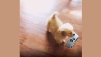 Cachorrinho Com Fome Faz Algo Inacreditável - Veja No Vídeo!
