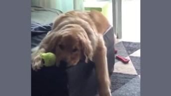 Cachorro Com Preguiça Na Cama - Alguém Mais Está Assim? Confira!
