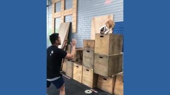 Cachorro Dando Super Pulo No Colo De Seu Tutor - Olha A Confiança!