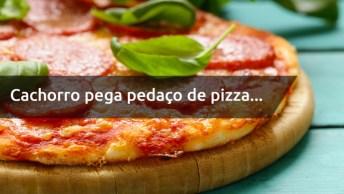 Cachorro Pegou Pedaço Inteiro De Pizza, Será Que Ele Gosta?