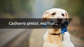 Cachorro Pintor, Escritor, Químico, Cozinheiro E Músico, Um Vídeo Legal!