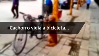 Cachorro Vigia A Bicicleta, E Na Hora Que O Dono Volta Acontece Algo Inesperado!