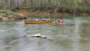 Cachorros Presos Em Canoa Desesperados, Salvos Por Outro Amigo De 4 Patas!