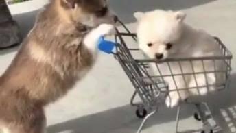 Cachorrinho Empurrando Amiguinho No Carrinho, Olha Só Que Fofura!