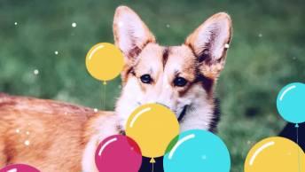Frase De Amizade Com Aniversário Para Amiga - Feliz Aniversário, Minha Amiga!
