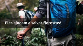 Dia 12 De Julho É Dia Do Engenheiro Florestal - Eles Ajudam A Salvar Florestas!
