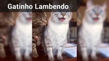 Gato Lambe Outro Gato E No Final Ganha Um Abraço