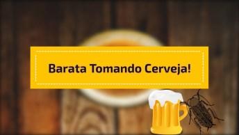 Barata Tomando Cerveja, Até Elas Não Resistem A Danada Hahaha!