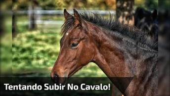 Confira Homem Embriagado Tentando Subir Em Um Cavalo, Para Rir Muito!