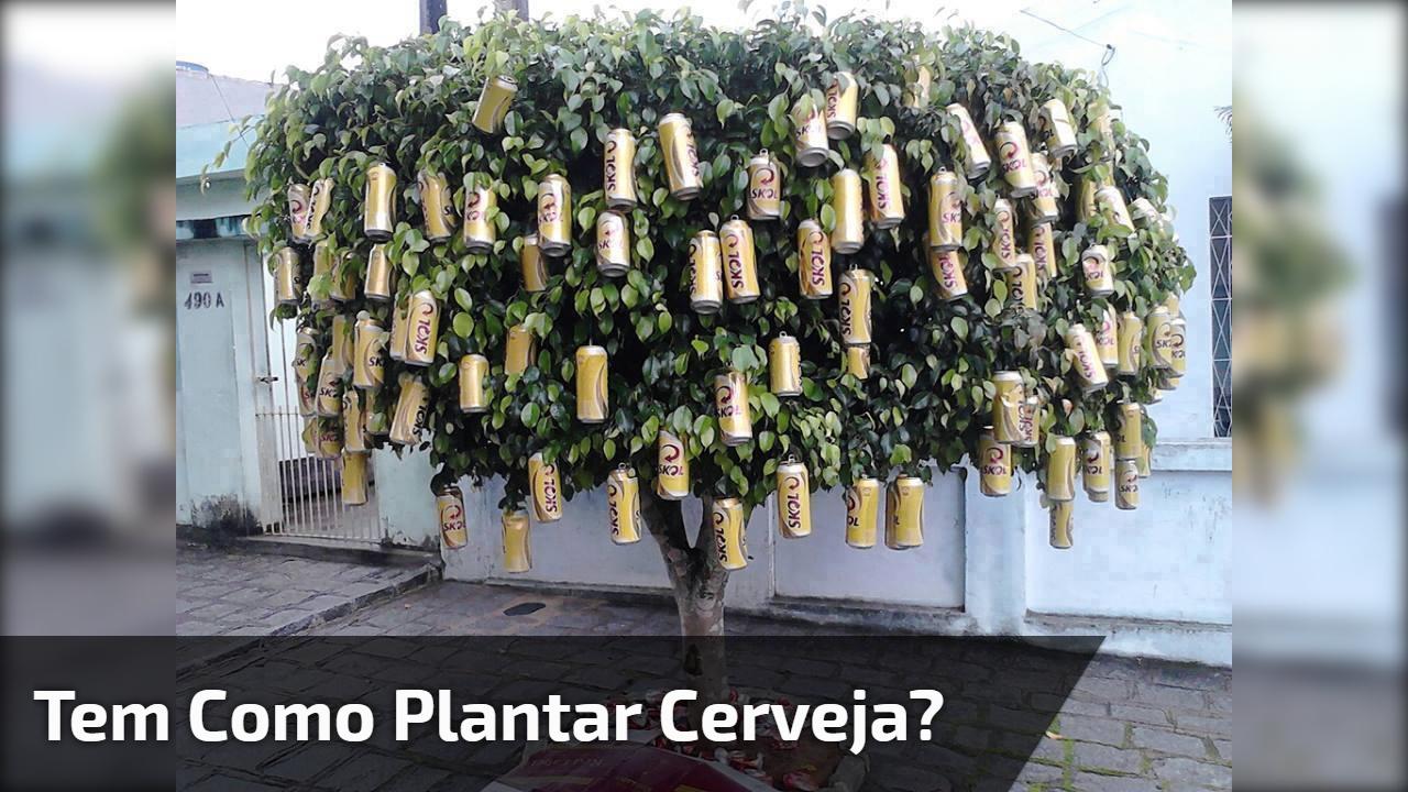 Tem como plantar cerveja?
