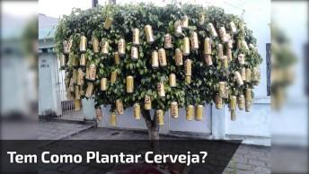 Tem Como Plantar Cerveja? Esses Caras Dizem Que Sim Kkk, Confira!