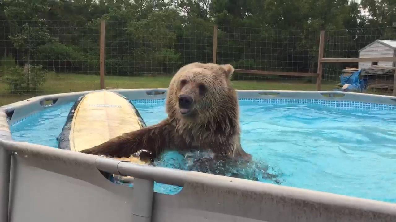 Cenas mais engraçadas de 2017 na piscina