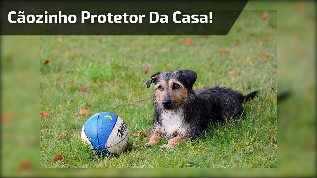 Cãozinho protetor da casa!