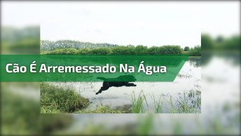 Cachorro É Atropelado Em Cachoeira Kkk, Assista Até O Fim!