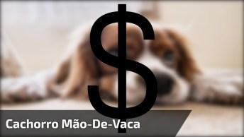 Cachorro Mão-De-Vaca, Ele Não Quer Emprestar Dinheiro Para Ninguém Hahaha!