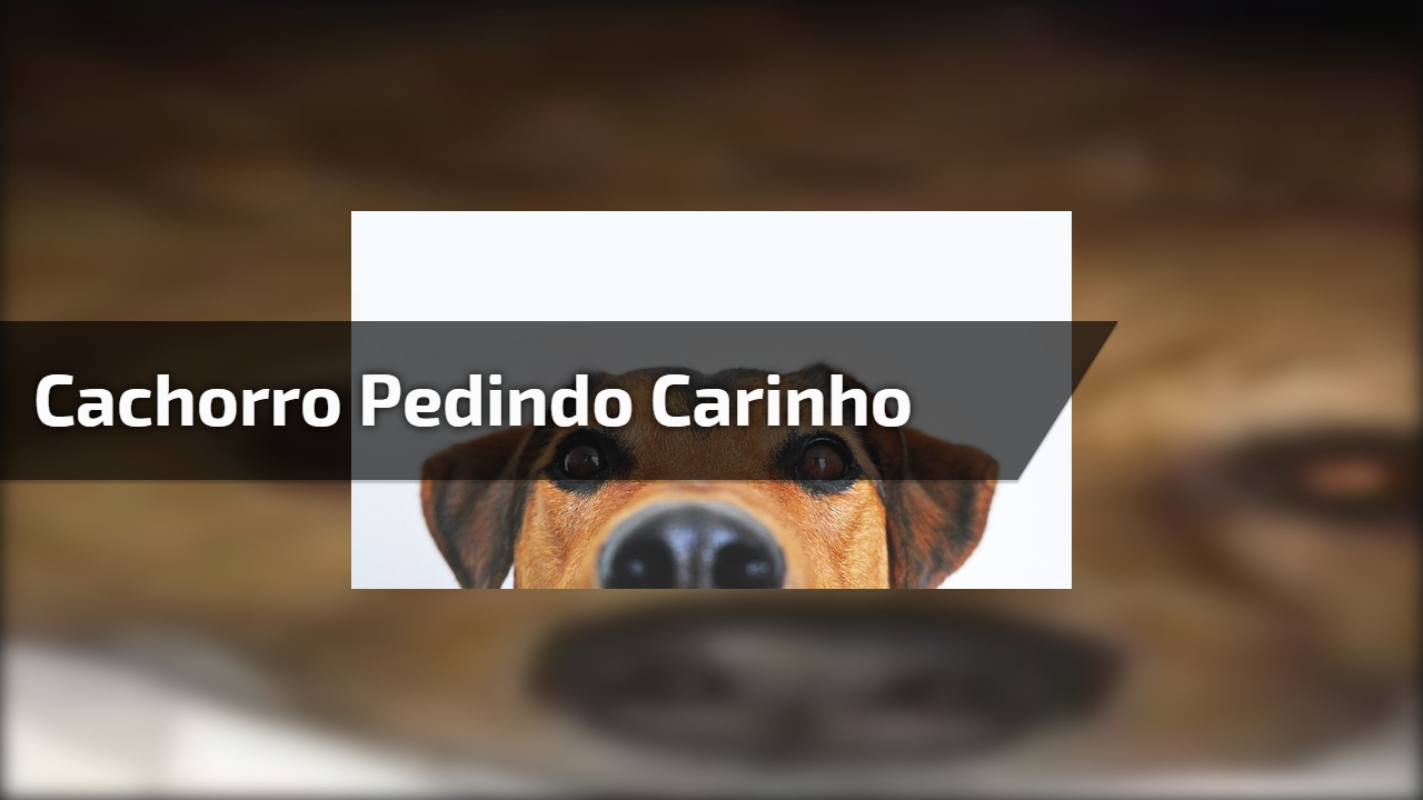 Cachorro pedindo carinho