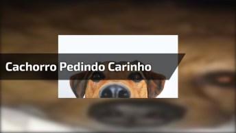 Cachorro Pedindo Carinho De Um Jeito Engraçado Hahaha, Confira!