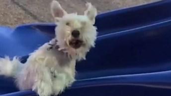 Cachorros Tomando Os Tombos Mais Engraçados, Impossível Não Rir Com Eles!