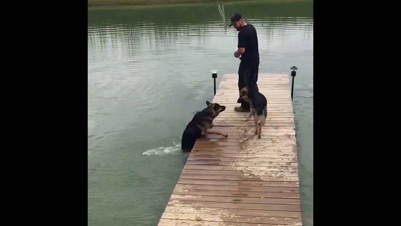 Coisas engraçadas que só os cachorros sabem fazer, para rir muito com esse video