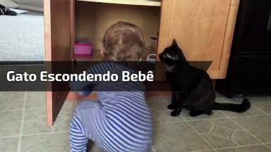 Gato Esconde Bebê Dentro De Armário, Que Gato Sacana!