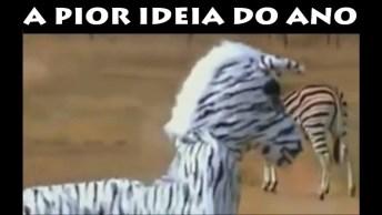Imitando Uma Zebra E Se Dando Mal, O Final Poderia Ter Sido Bem Trágico. . .