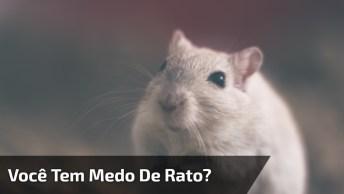 Mãe Com Medo De Rato, Fugindo Com Música Super Agitada E Conhecida!