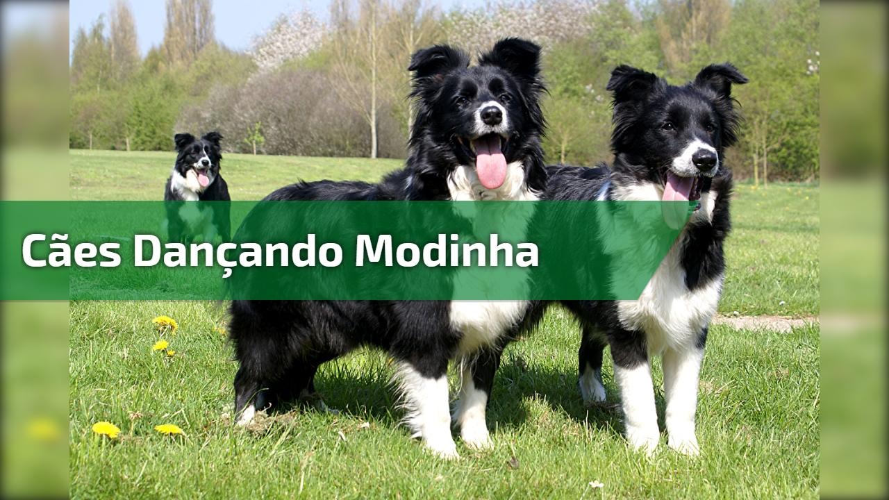 Cães dançando Modinha
