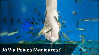 Peixes Pedicures, Veja Como É Divertido Fazer As Unhas Dos Pés Assim Kkk!