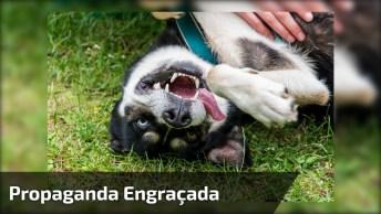 Propaganda De Petisco De Cachorro Engraçada, Esse Cara Se Deu Mal Hahaha!