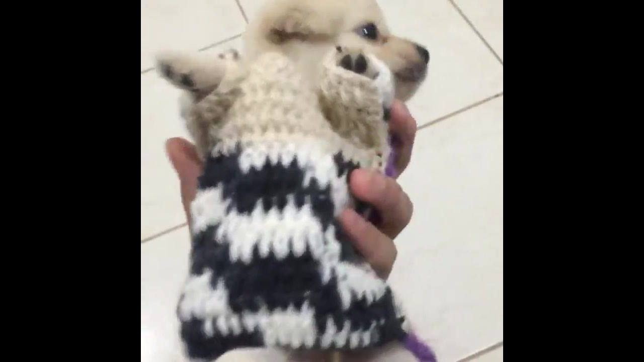 Roupa de crochê para cachorro, só que ele não vai conseguir andar hahaha!