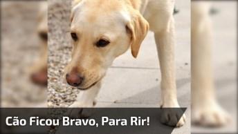Se For Passar Máscara No Rosto, Saia De Perto Dos Cachorros Hahaha!