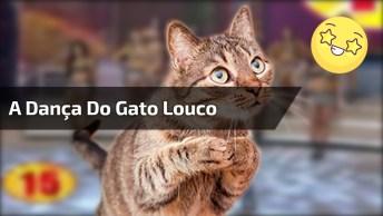 Se Vira Nos 30 Com A Dança Do Gato Louco, Alguém Explica Isso? Kkk!