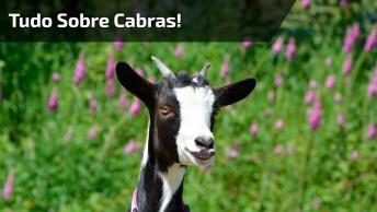 Serumaninho - Mustafary Vai Te Ensinar Tudo Sobre Cabras!