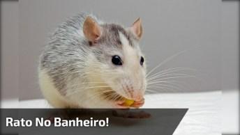 Tentando Matar Um Rato No Banheiro, O Gato E Seu Dono Deram Um Show Hahaha!