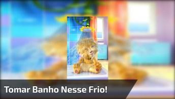 Tomar Banho Nesse Frio, P*@# Que P#$@& Kkk, Envie Pelo Whatsapp!