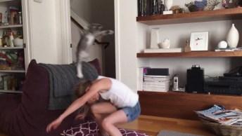 Veja O Motivo Dos Gatos Serem Considerados Os Mais Engraçados Do Mundo!