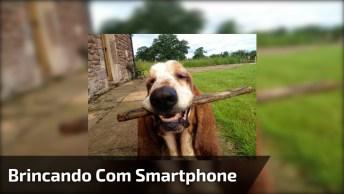 Veja O Que Acontece Quando Vai Brincar Com Cachorro Mexendo Em Smartphone!