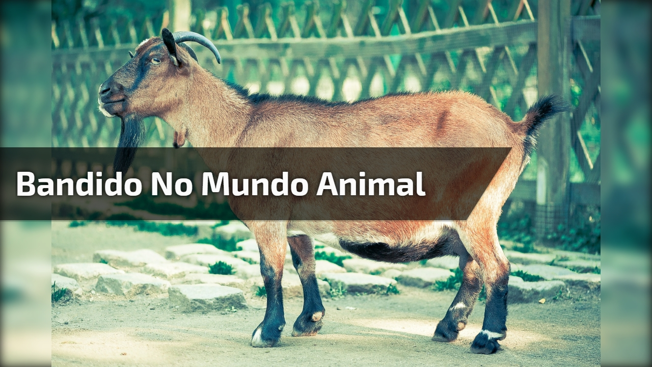 Vida de Bandido no mundo animal, você vai rir muito com esse video hahaha!