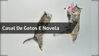 Vídeo Engraçado Para Whatsapp Com Casal De Gato, Casais São Todos Iguais. . .