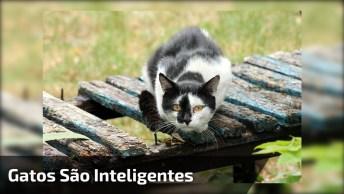 Vídeo Especial Para Quem Ama Gatos! Como Os Bichanos São Inteligentes!