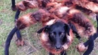 Cachorro Aranha Esta De Volta, Alguém Ai Se Lembra Dele?