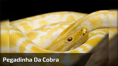 Pegadinha Da Cobra Na Banana Em Supermercado, Para Dar Muitas Risadas!