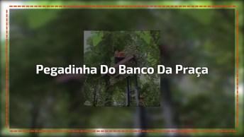 Pegadinha Do Banco Da Praça Que Sobe, Imagina O Susto Kkk!