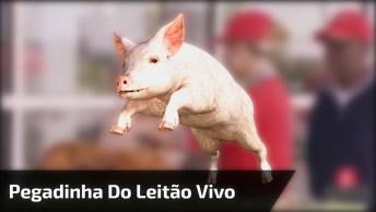 Pegadinha Do Leitão Vivo, Veja O Susto Da Galera Que Engraçado Kkk!