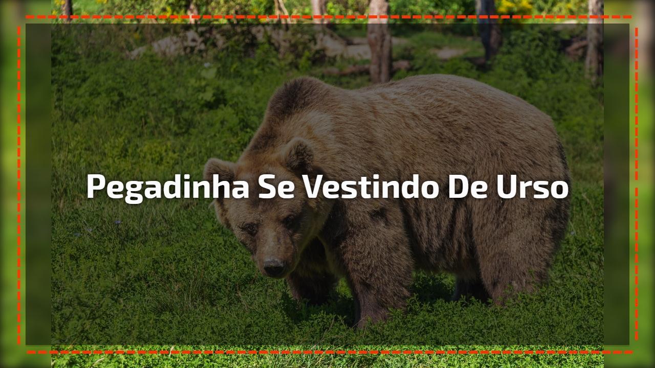 Pegadinha se vestindo de urso