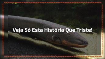 Veja Só Esta História Que Triste, Kkk! Está Difícil Até Pros Peixes Elétricos!